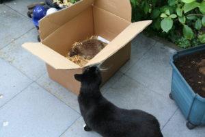 Katze neugierig auf Igel im Karton, copyright Berit Franz