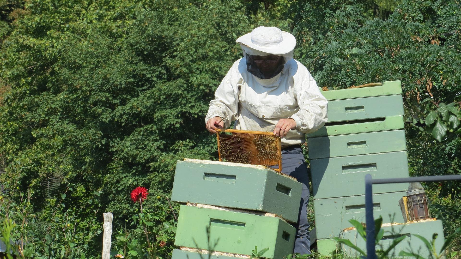 beekeeper-941688_1920