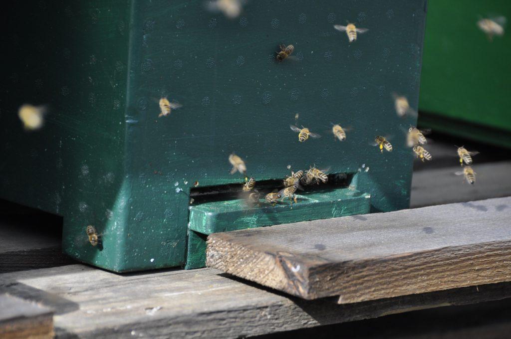Bienen kehren in den Stock zurück, Herkunft Pixabay
