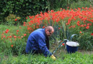 Gartenarbeit Jäten