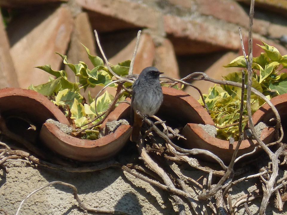Ein Vogel auf einem bepflanzten Dach, Pixabay