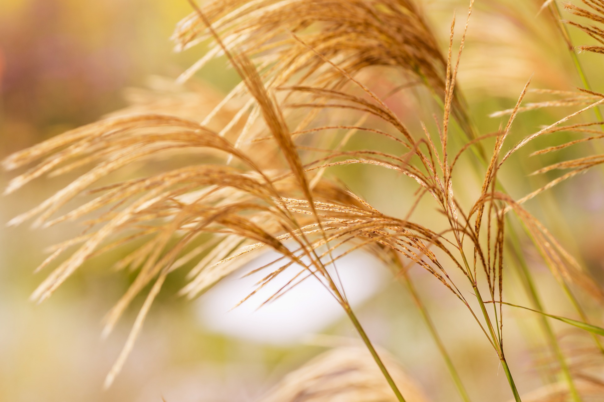 Gräser, Herkunft Pixabay