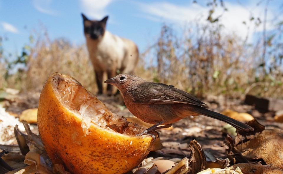 Eine Katze beobachtet einen Vogel im Garten, Pixabay