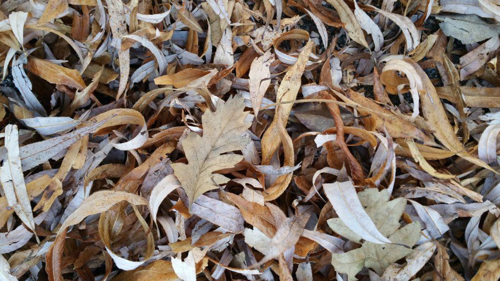 Herbstlaub, Herkunft Pixabay