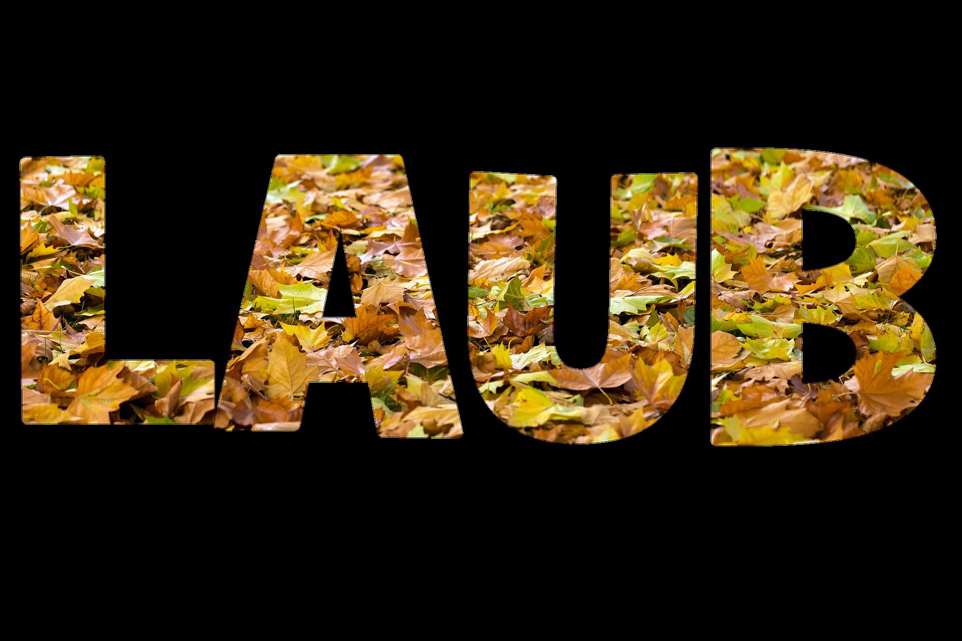 Laub Schriftzug, Herkunft Pixabay