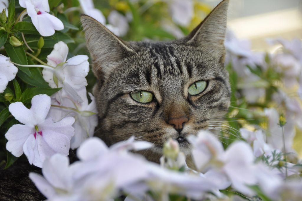 Katze im Blumenbeet, Herkunft Pixabay