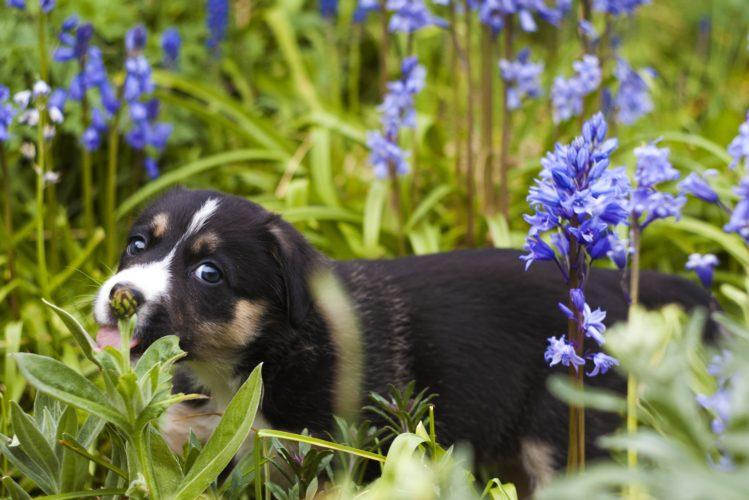 Hund im Garten, Herkunft Pixabay