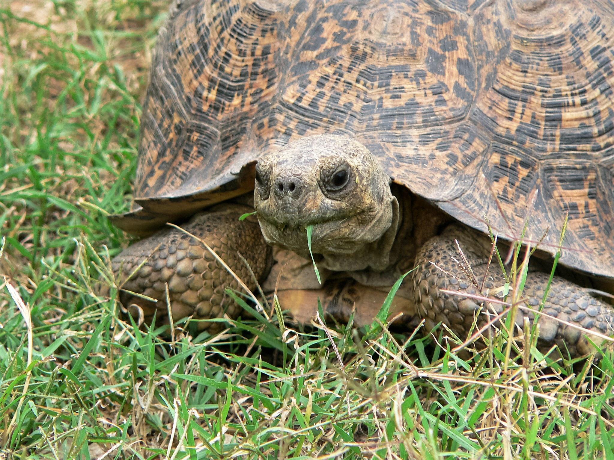 turtle-1076304